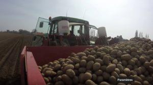 Les plantations de pommes de terre bio ont démarré